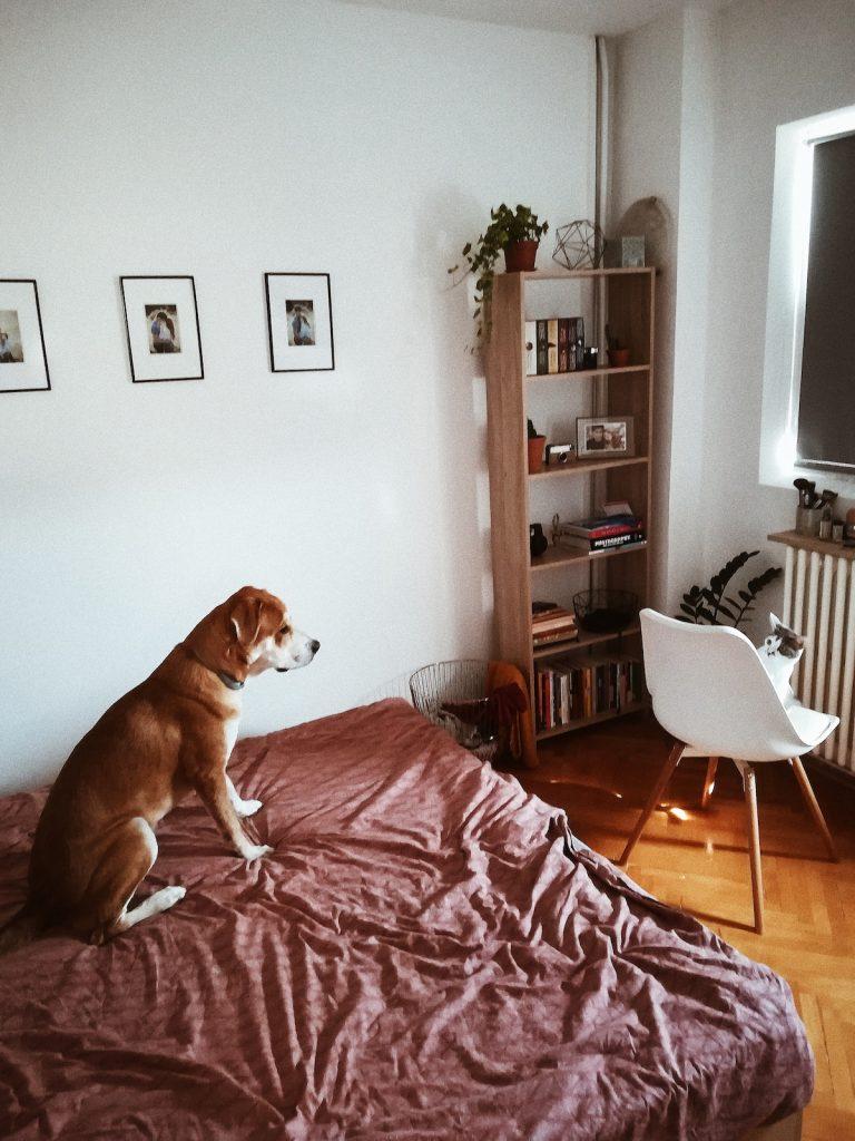 cum ati amenajezi casa fotogenica bani putini oana gociman dormitor animale