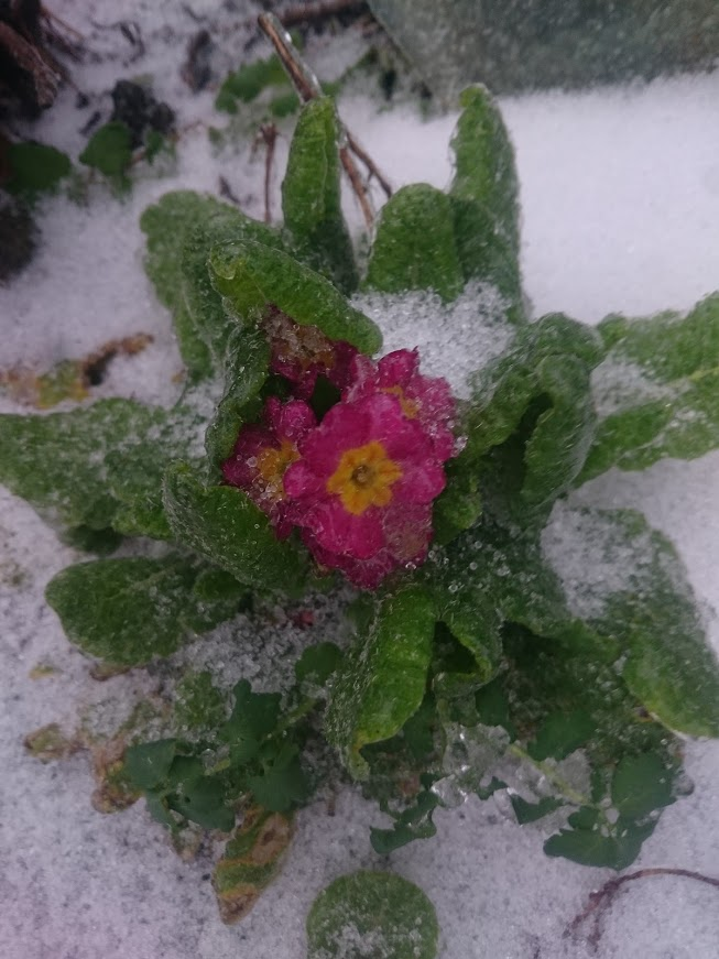 Gradina de flori iarna