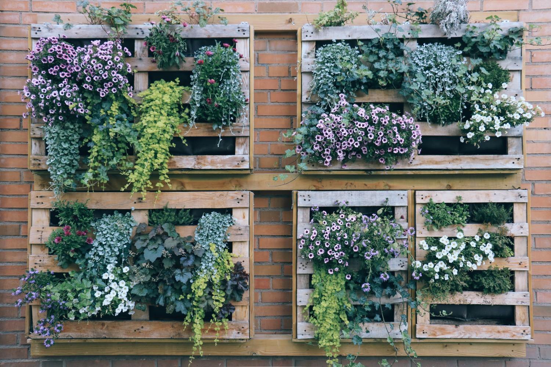 idei creative gradina plante