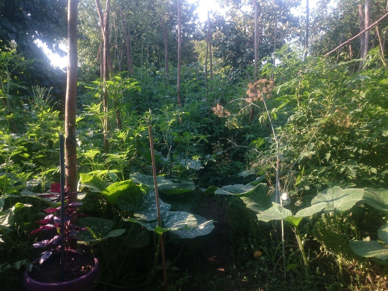permacultura gradina de legume