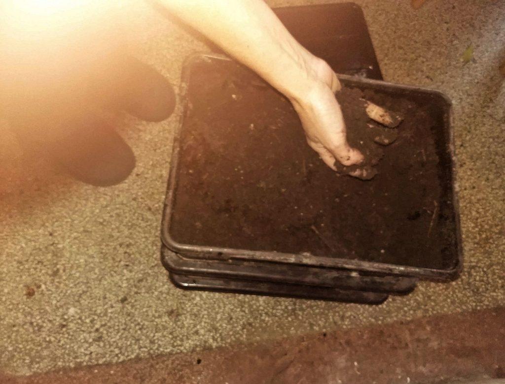 Compost final