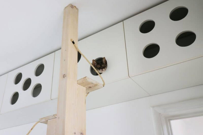 studio foto apartament mobilier pentru pisici