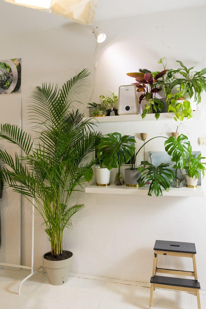 plante apartament ANA CONSTANTINESCU UMIDIFICATOR PLANTE INTERIOR