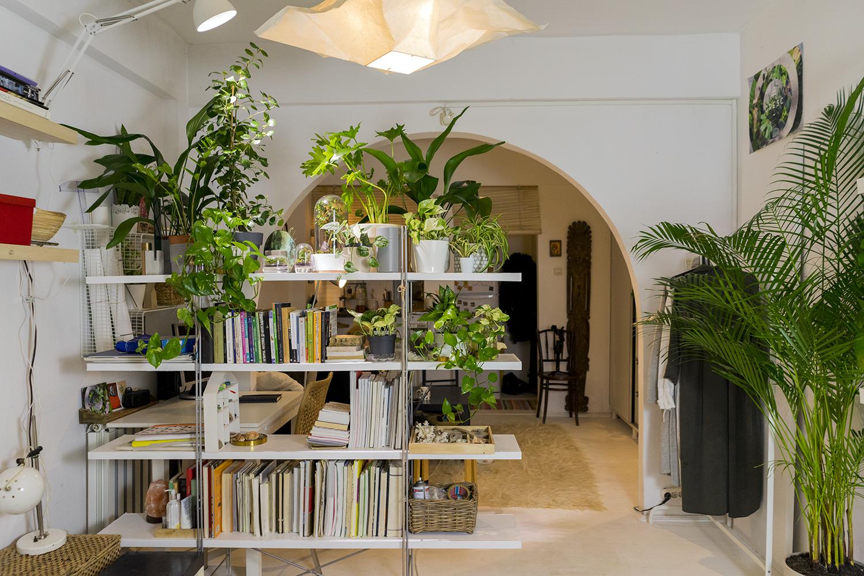 plante apartament lumini interior ana constantinescu