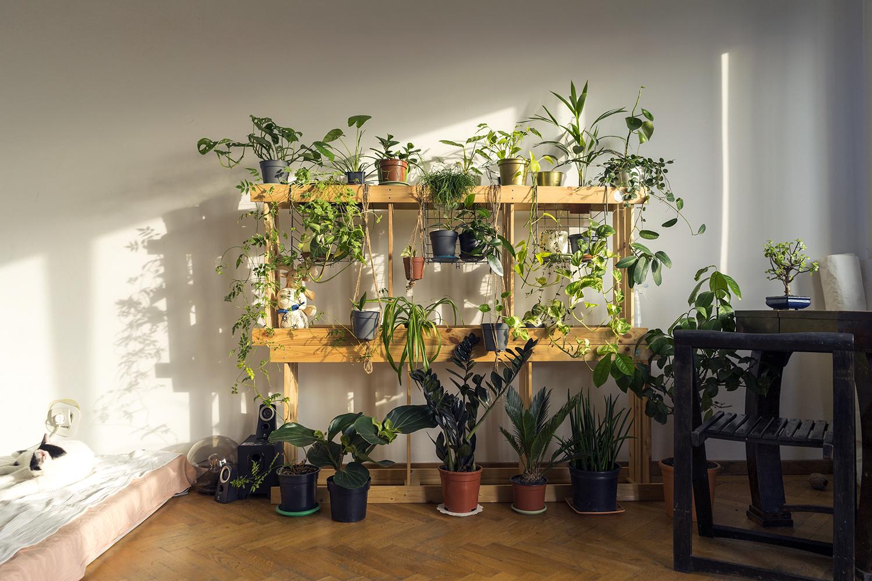 plante apartament mia mihaela etajere ikea