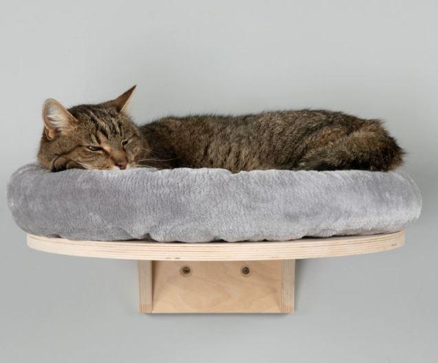 Patut pisici suspendat