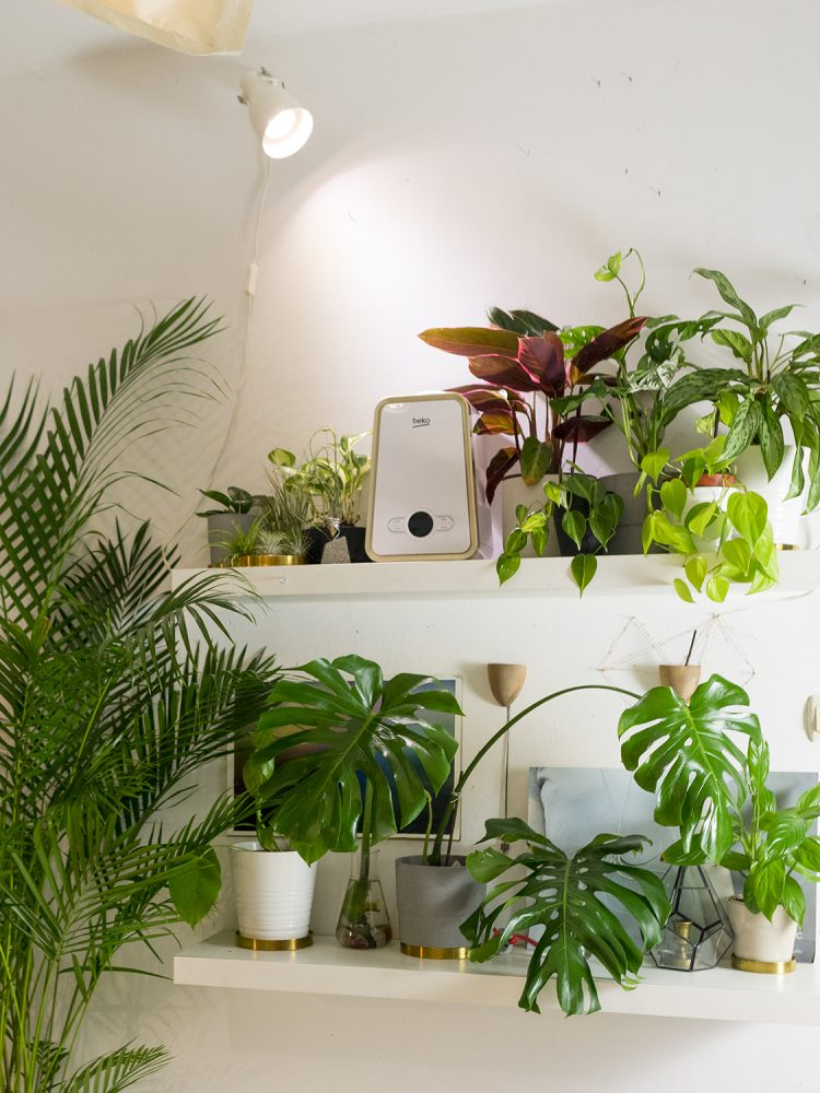 garsoniera dubla bucuresti ingrijire plante (1)