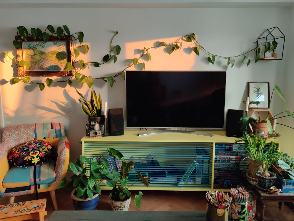 multe plante de apartament