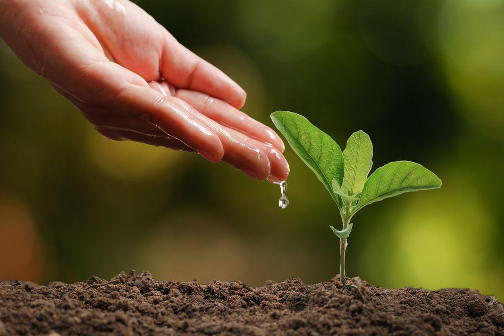udarea plantelor