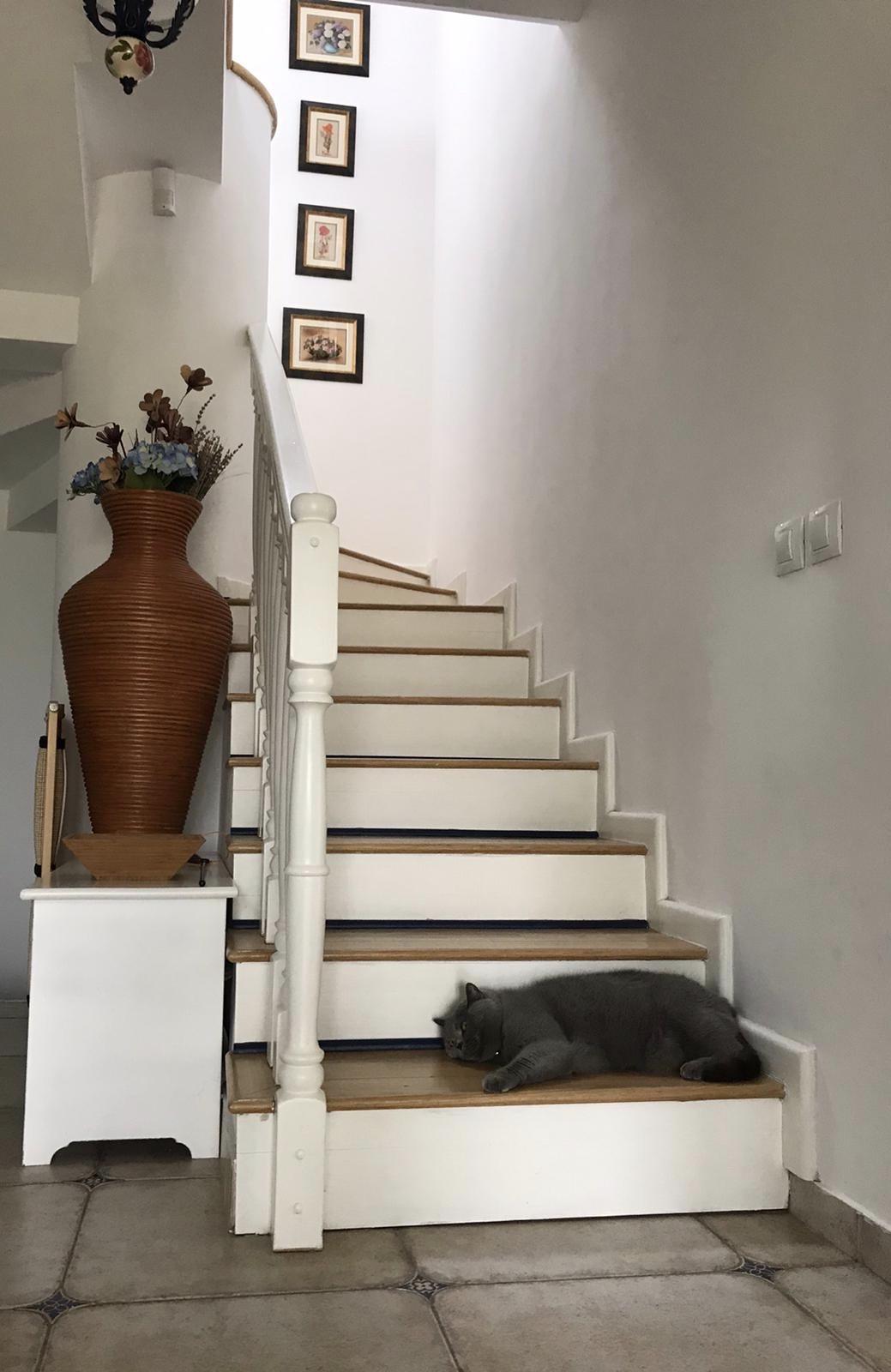 scari cu pisica