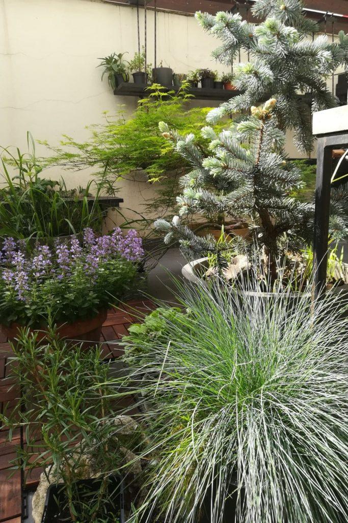 plante, balcon