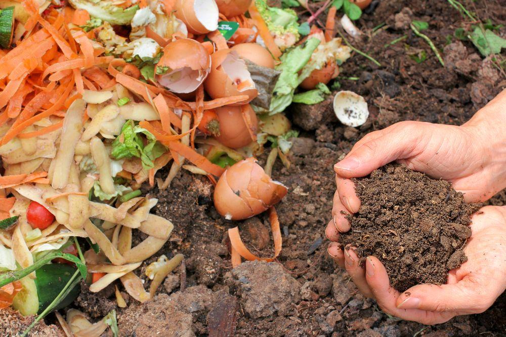 Pământ de flori compost