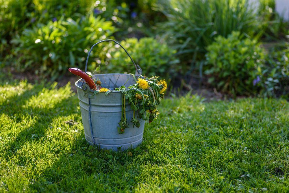 Cum să folosești oțetul ca să scai de buruienile din grădină
