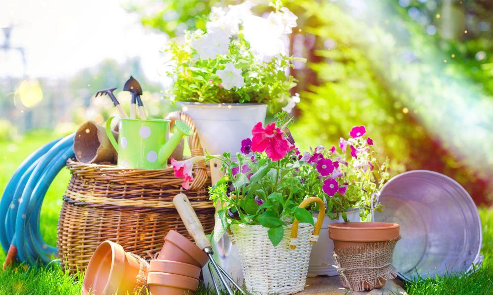 Mutarea plantelor afară