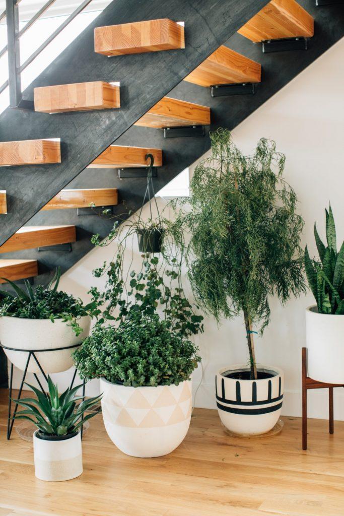 spatiu sub scari - plante 3