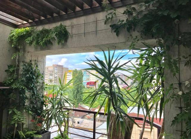 1.planta exotica_Yucca