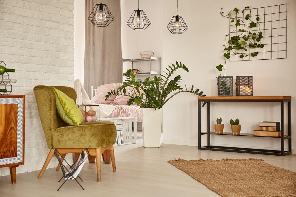 trenduri decorative plante agățătoare
