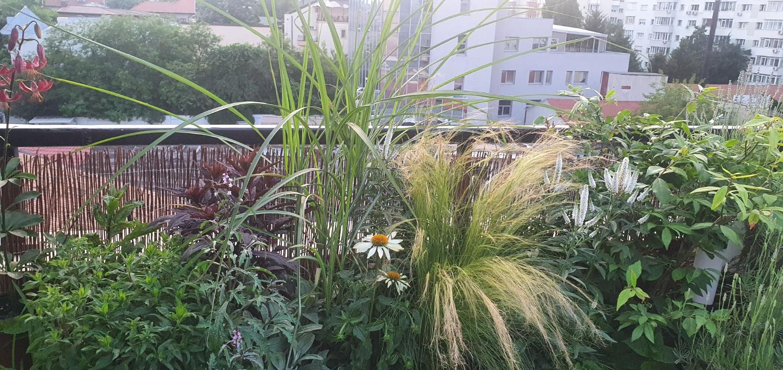 """2. Plantele cu flori albe Echinacea hybrida """"Pow Wow White"""" si Veronica spicata """"First Lady"""