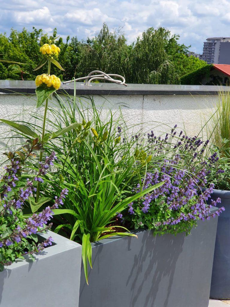 Nepeta & lavanda (plantele cu flori mov)
