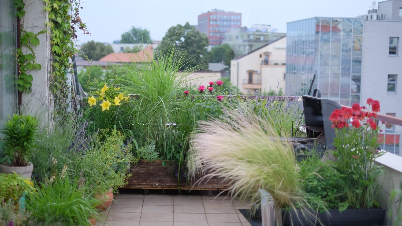 3.1. Mix plante pentru zone cu soare- expuse-vara