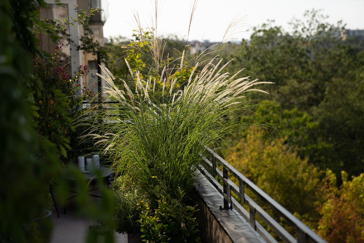 Balcon cu plante
