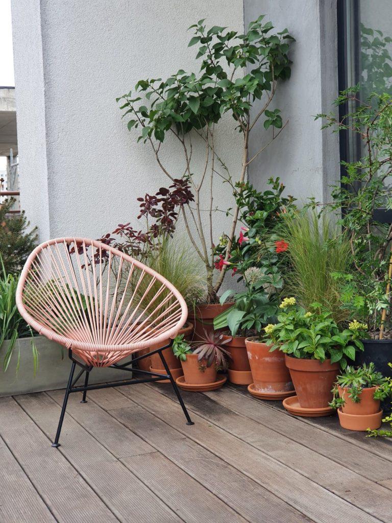Amenajare balcon terasa cu plante - Luminița Nicorici, Primitiv Plants (13)