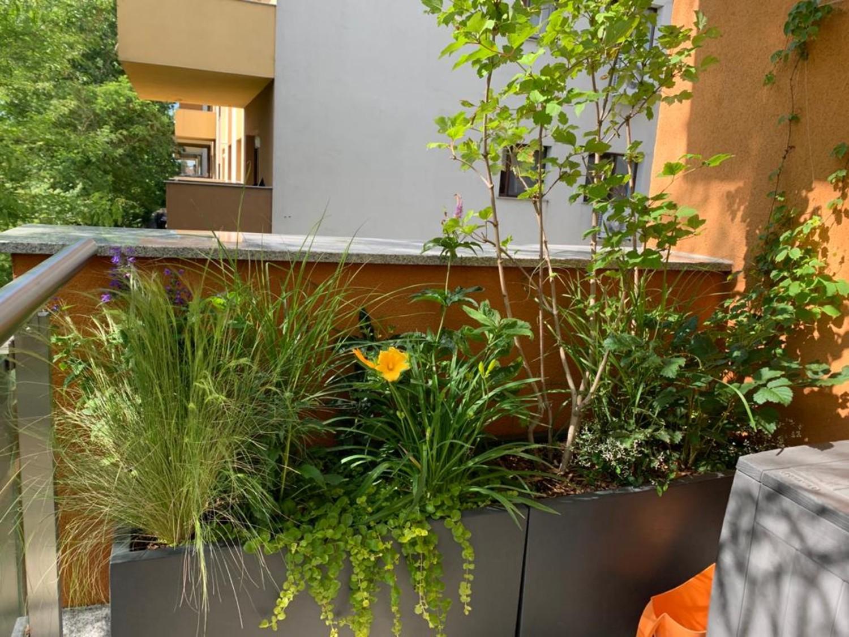 Amenajare balcon terasa cu plante - Luminița Nicorici, Primitiv Plants (21)
