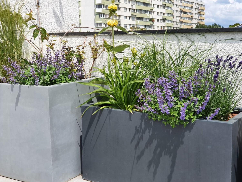 Amenajare balcon terasa cu plante - Luminița Nicorici, Primitiv Plants (23)
