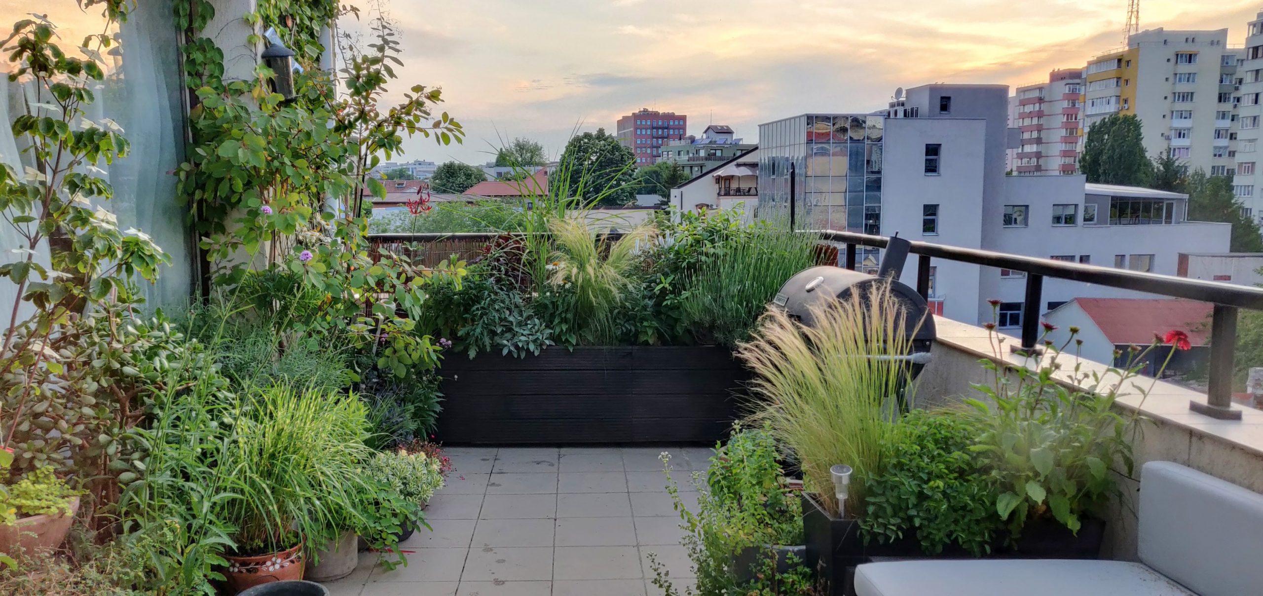 Amenajare balcon terasa cu plante - Luminița Nicorici, Primitiv Plants