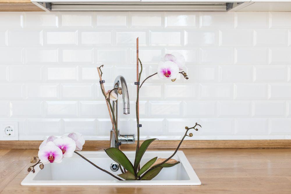 cum se udă orhideele udarea