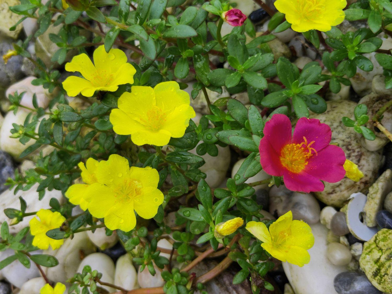udare flori de piatra