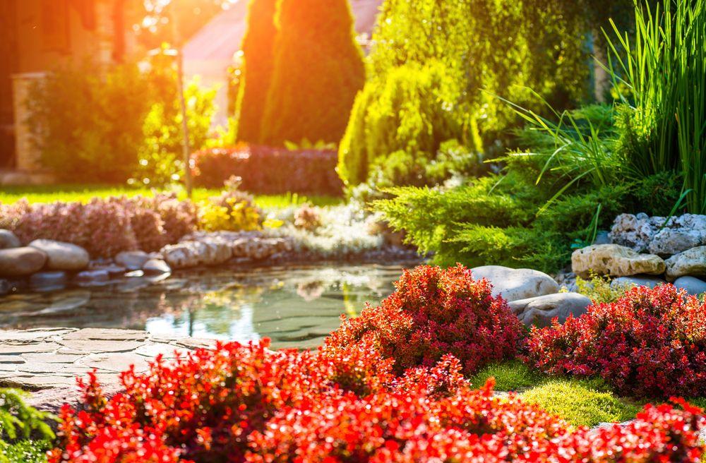 Iazuri de grădină