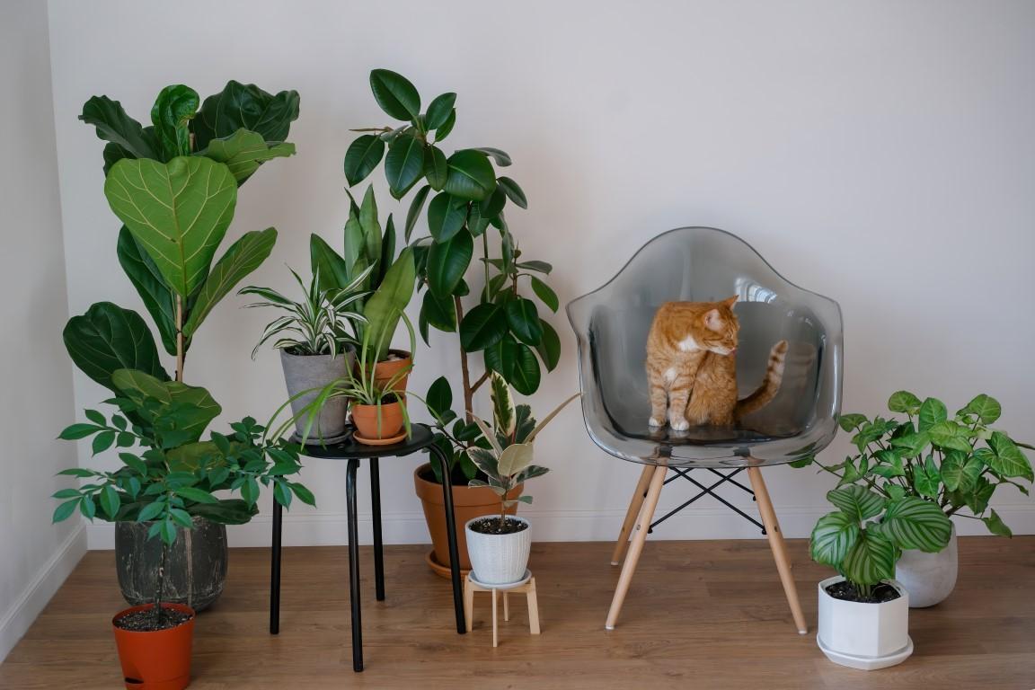 Plante non-toxice pentru căței și pisici
