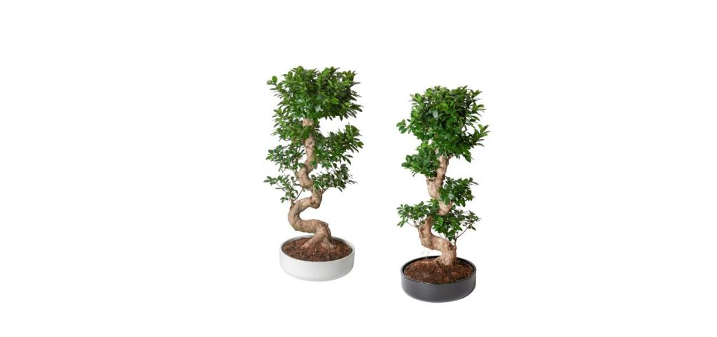 Bonsai via Ikea
