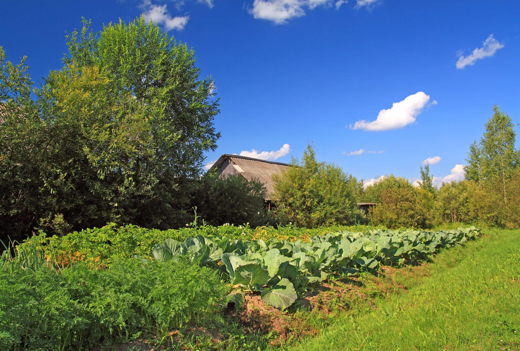 gradina de legume soare