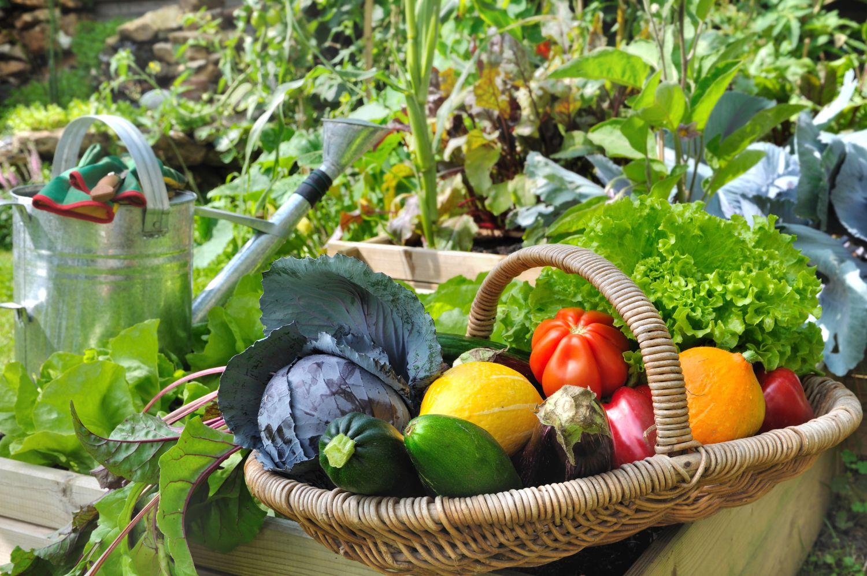 legume compatibile gradina