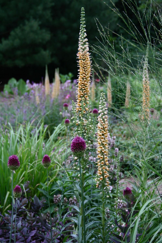 Florile înalte au multe beneficii și pot îndeplini mai multe roluri