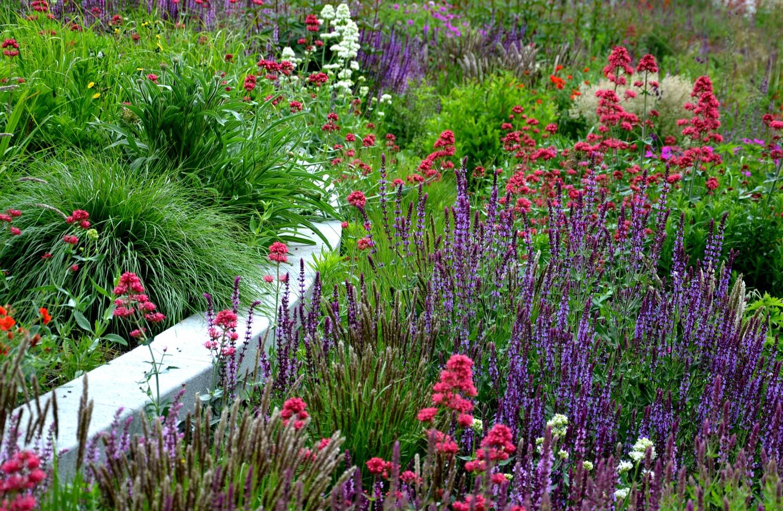 Florile înalte pot fi un adevărat atu pentru grădina ta