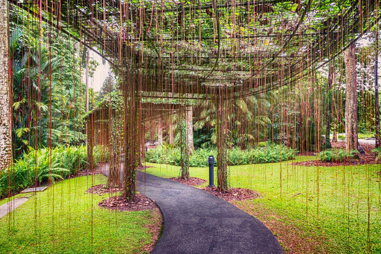 gradina botanica tropicala singapore