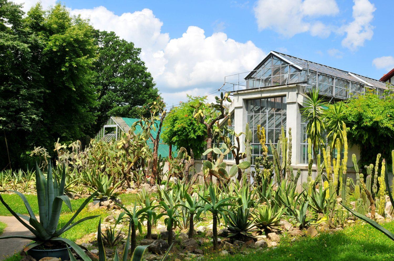 gradini de vis gradina botanica cluj