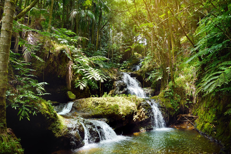 cascada gradina tropicala hawaii