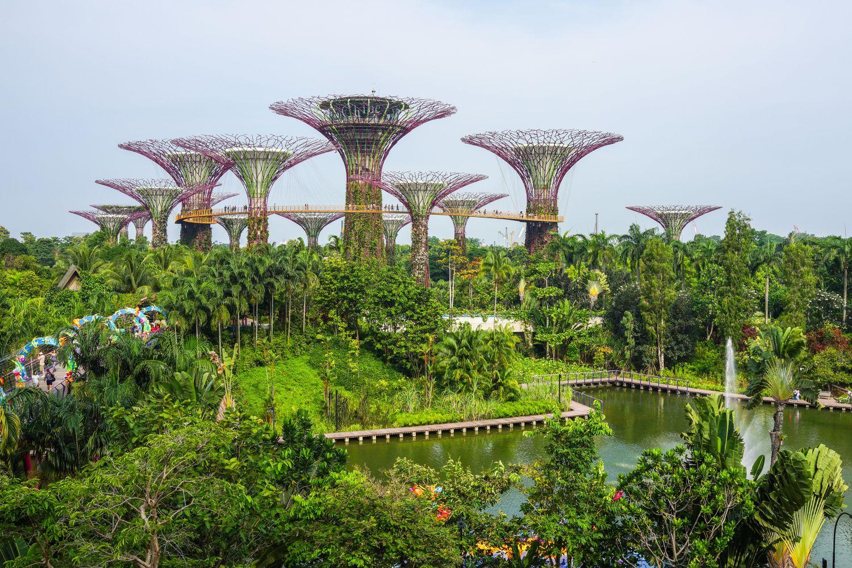 gradini de vis singapore