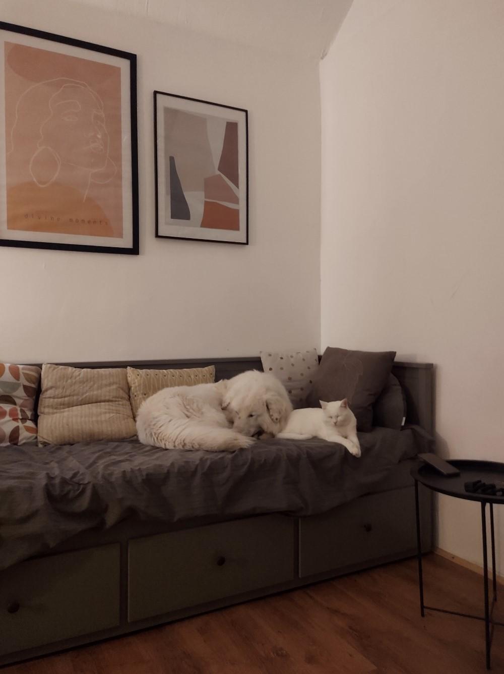 tiny house Iași Constantin și iubita lui s-au ocupat de designul casei, cu mobila de la IKEA și JYSK