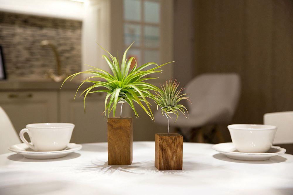 plantele aeriene alegere