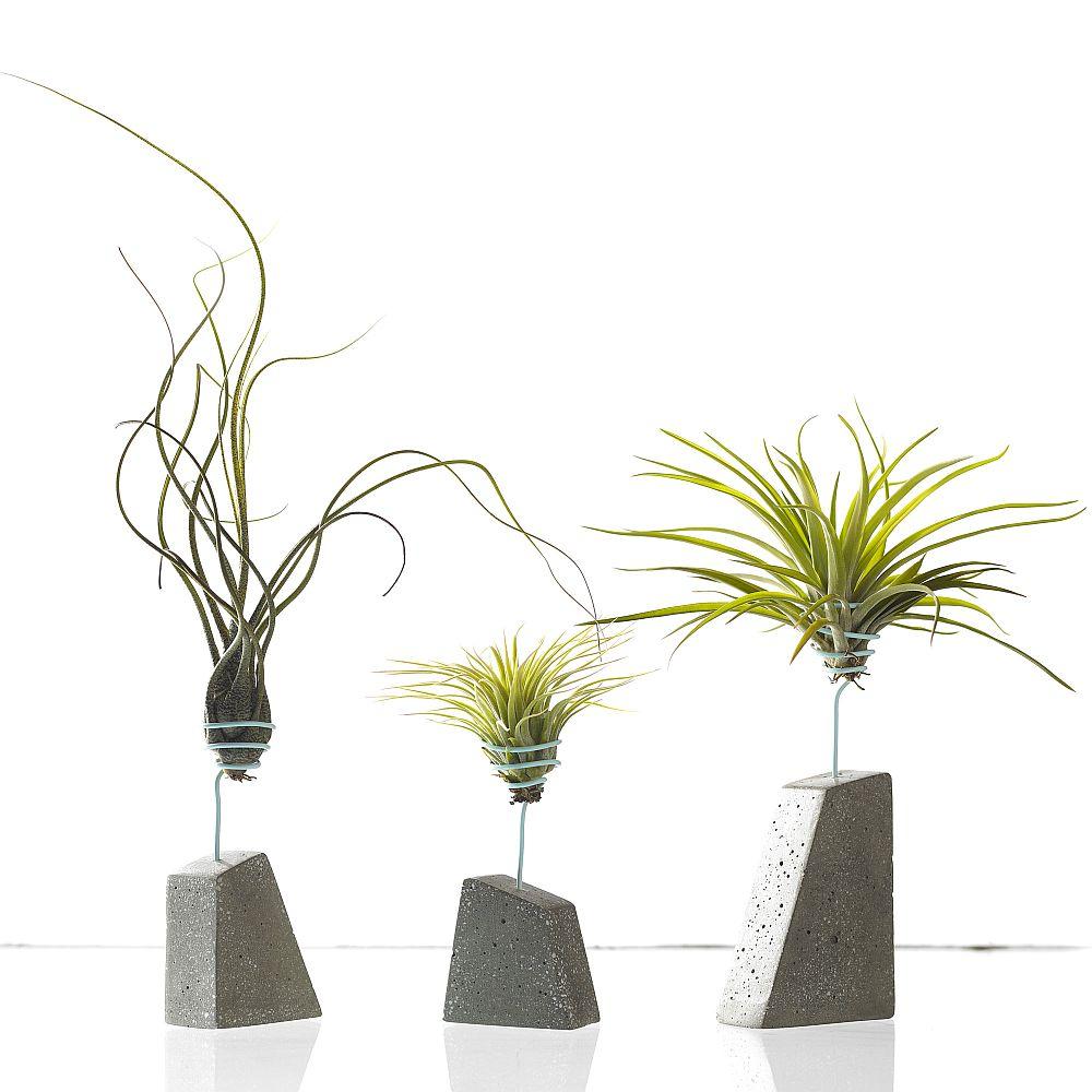 plantele aeriene greșeli