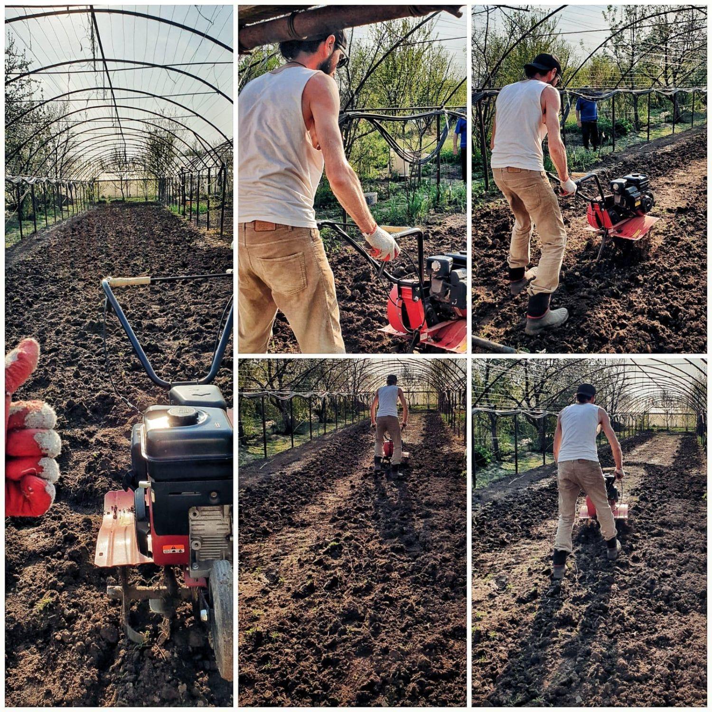 Soțul Cristinei, un artist, dar și grădinar priceput