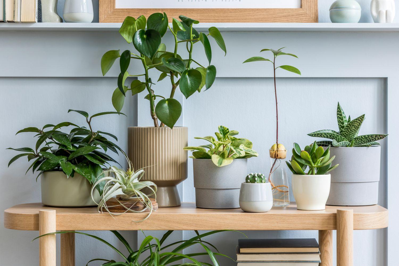 ghivece plante apartament