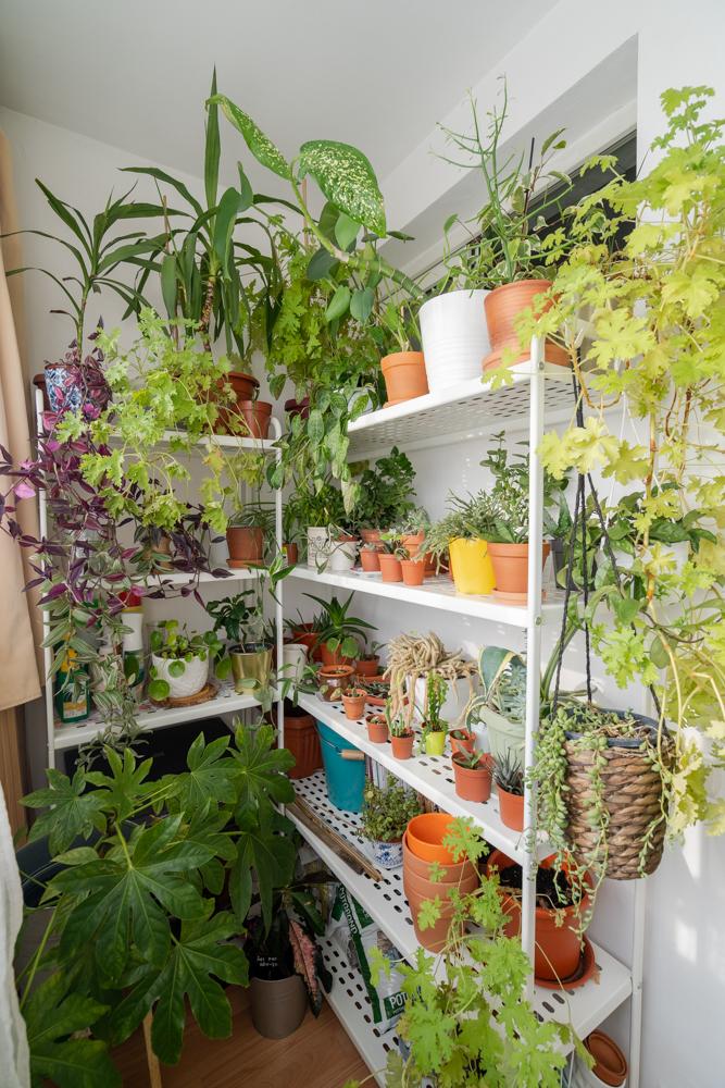 plante apartament plante interior floraria trias
