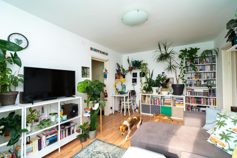 plante interior plante apartament