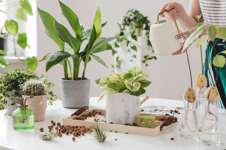 udare plante